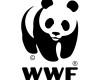 WWF-100x80